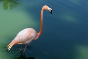 Seks pozitsiya flamingo